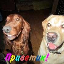 Передержка ваших собак без клеток. Опытный кинолог, в Москве
