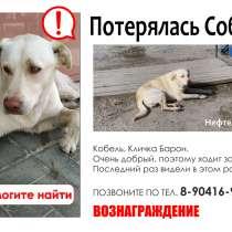 Потерялась собака, в Нефтеюганске