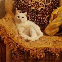 Отдам котика Пломбира бесплатно, в Кирове