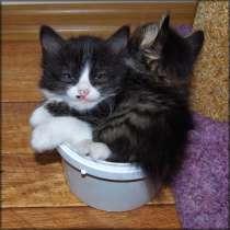 Котёнок-мальчик, 1.4 месяца, в Благовещенске