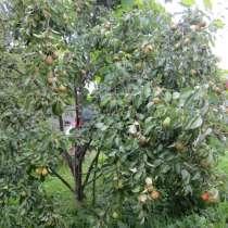 Фрукты и овощи из собственного сада в Вязьме, в Вязьме