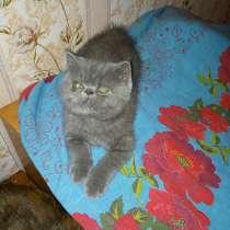 Экзотические плюшевые короткошетстные мраморные котята экстр, в г.Могилёв