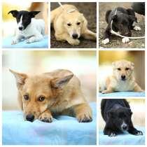 Очаровательные щенки разных окрасов ищут дом, в Москве