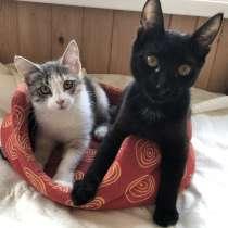 Замечательные котята Бусинка и Ричард ищут дом!, в Москве