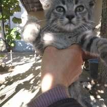 Котята, в г.Николаев