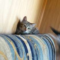 Отдам котят, в Екатеринбурге