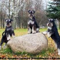 Проводим набор собак в бесплатные группы по дрессировке, в г.Минск