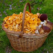 Продаю грибы лисичка.350руб 2литра, в Орехово-Зуево