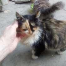 Отдадим котят в хорошие руки, в Краснодаре