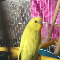 Волнистый попугай вмести с клеткой, в Екатеринбурге
