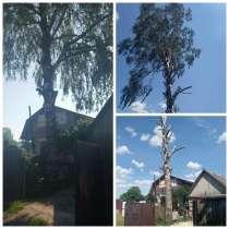 Валка опасных деревья, в г.Минск