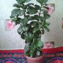 Продаю цветы. Недорого, в г.Бишкек