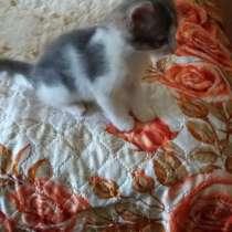 Котенок в добрые руки, в г.Новополоцк