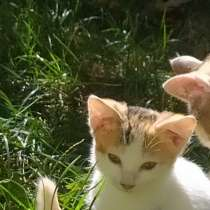 Отдам бесплатно котят в хорошие, добрые руки, в Ейске