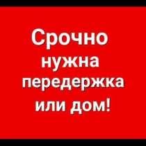 Помощь пострадавшим животным, в Москве