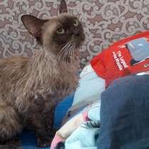 Отдам кошку, в Красноярске