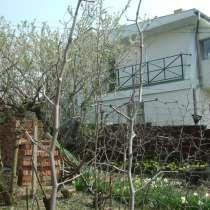 Колоновидные зизифусы в садовом дизайне, в Севастополе