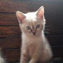Котята обычные, в г.Луганск