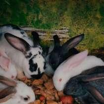Кролики, в Комсомольске-на-Амуре
