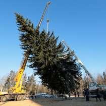 Доставка живых новогодних ёлок и сосен, в Нижнем Новгороде