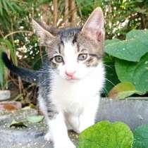 Котенок, в Сочи