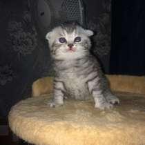 Котята, в г.Кобрин