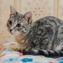 Ищет дом трепетная котенок Буся, в Москве