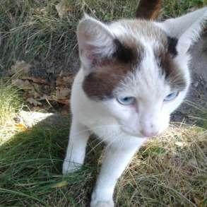 Найден кот, в г.Бишкек