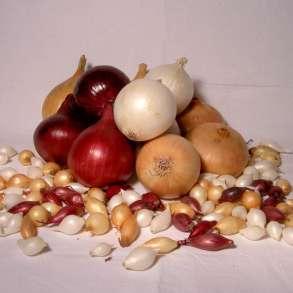 Продам лук-севок из Голландии на Весну 2020, в Кирове