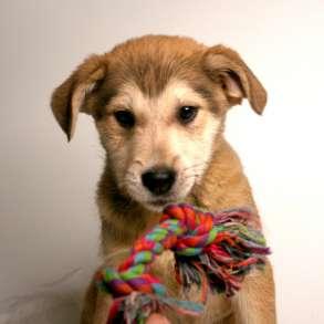 Малыши ищут семью: 3 щенка метиса в в дар, в Москве