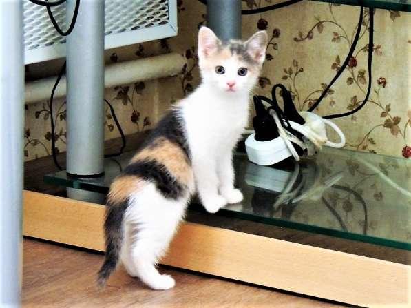 Котята в дар в Домодедове фото 4