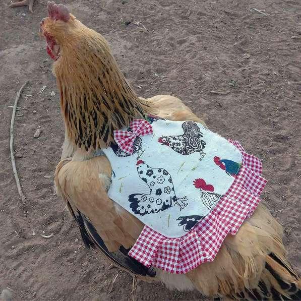 Попона для кур Защита курицы от петуха в Астрахани фото 5