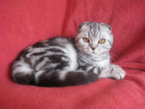 Кошечка серебристая мраморная (№ 1)