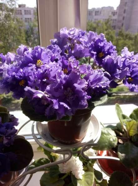 Растения для дома и офиса в Новосибирске фото 7