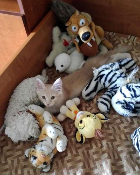 Котенок, мальчик 2,5 месяцев