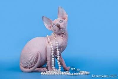 Одна из самых удивительных пород кошек -
