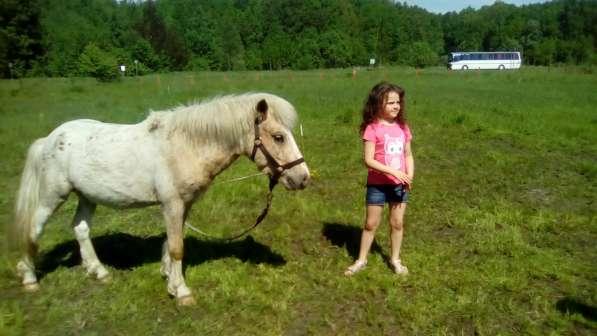 Верховая езда ребенка на пони. Полесск в Калининграде фото 3
