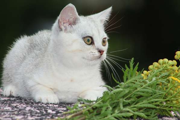 Котик Изюм