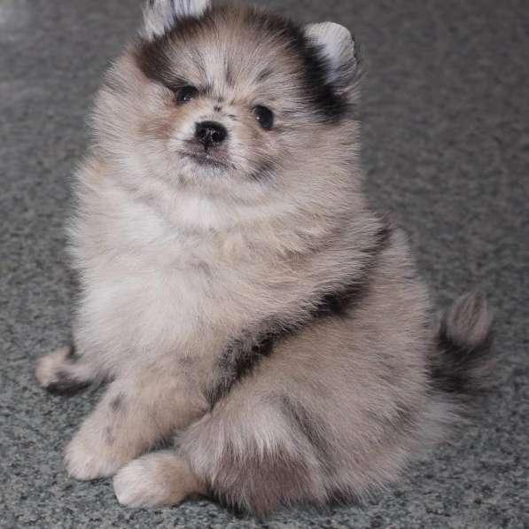 Продажа щенков в Казани