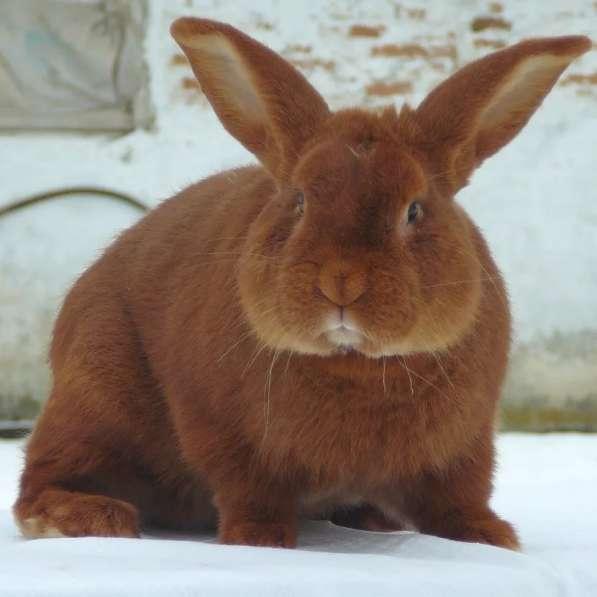 Комбикорм для кроликов Финиш ПК 90