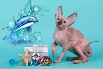 Волшебный котёнок сфинкс с другой планет в фото 4