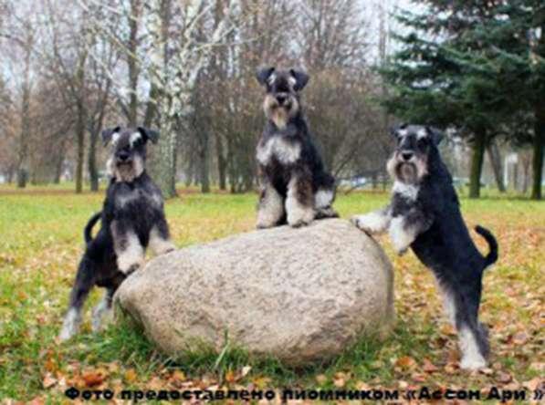 Проводим набор собак в бесплатные группы по дрессировке