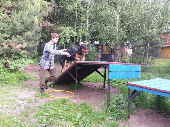 Передержка и дрессировка собак в Раменское фото 15