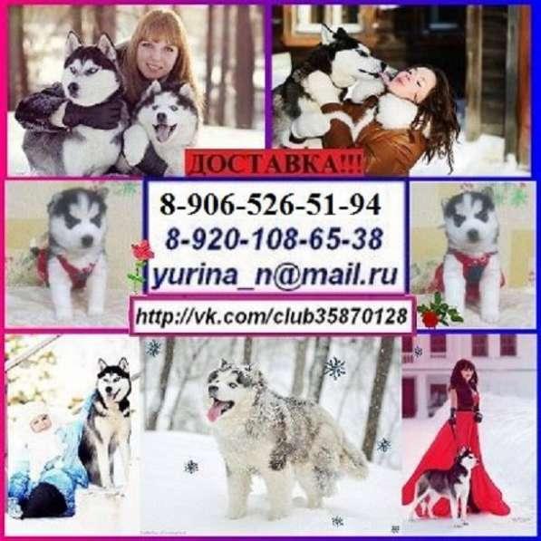 Продам хаски прелестных щенят