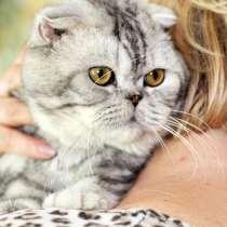 Вислоухий котик Оскар ищет дом, в г.Москва