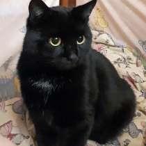 Ваш домашний оберег, молодой домашний котик Уголек в дар, в г.Москва