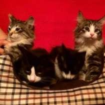 Отдам даром Милейшие домашние котята в добрые руки, в г.Москва