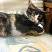 Соня-Совушка, очень ласковая домашняя кошечка, в г.Москва