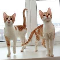 Тим и Том, солнечные зайчики. Котята в добрые руки, в Калуге