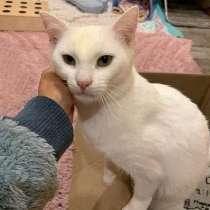 Ласковое чудо, нежный домашний котик Пломбирчик, в г.Санкт-Петербург